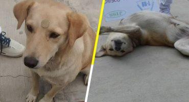 Estudiantes de preparatoria en Oaxaca, denuncian a policías que presuntamente asesinaron a un perrito 😡
