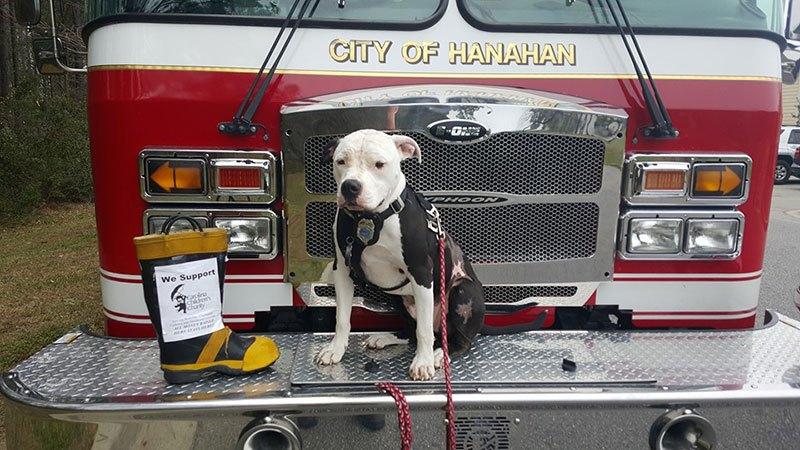 La historia del pitbull que fue salvado de un incendio y se convirtió en bombero