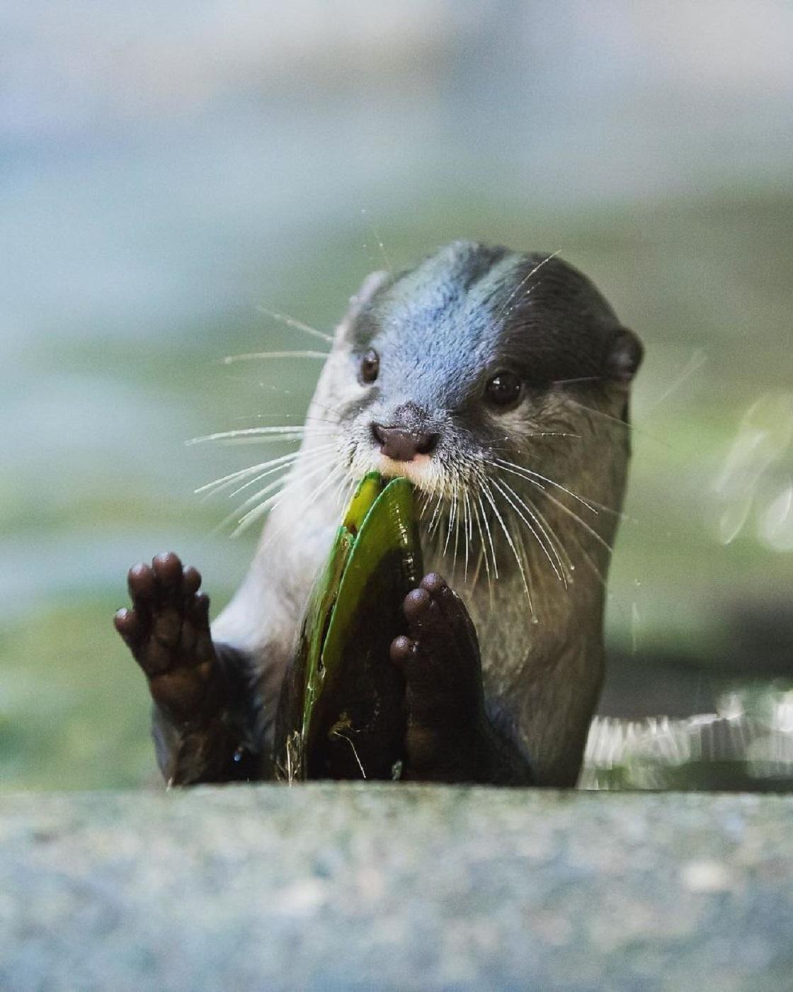 Fotografías de vida salvaje - Robert, hijo de Steve Irwin
