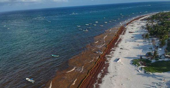 Empresario ofrece ayuda para barrer el sargazo en la Riviera Maya