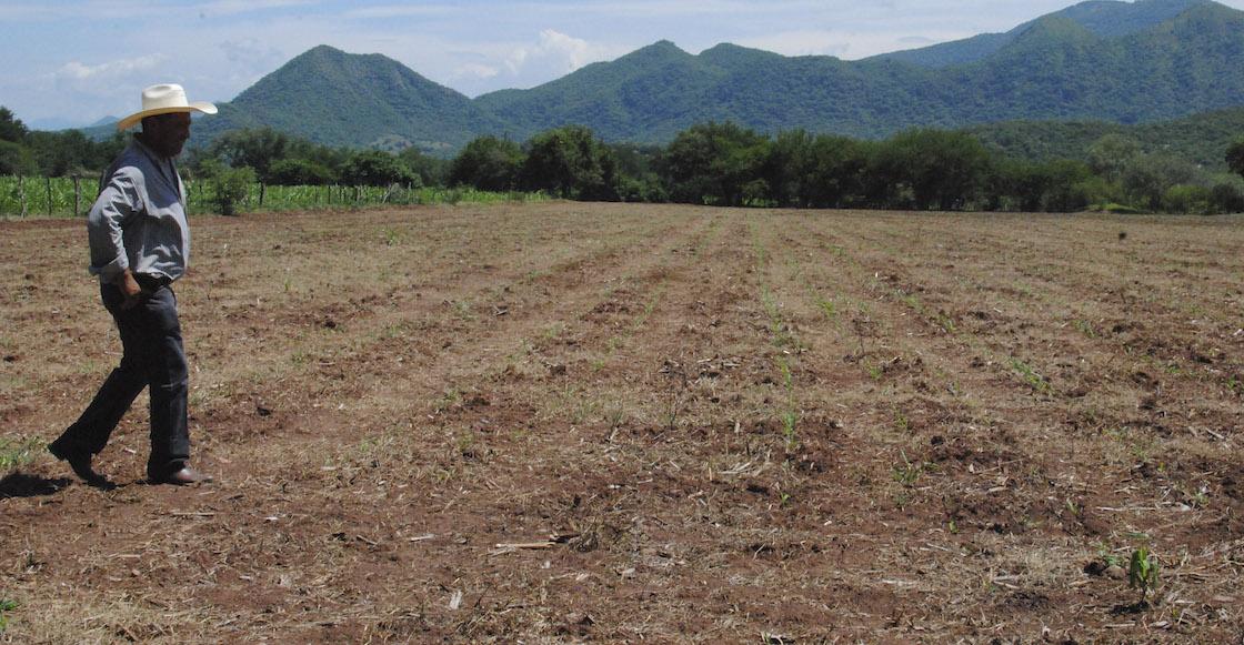 Preocupante sequía en Veracruz: hay cerca de 125 municipios afectados
