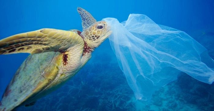 """Esto es lo que pasa con las bolsas de plástico """"biodegradables"""""""