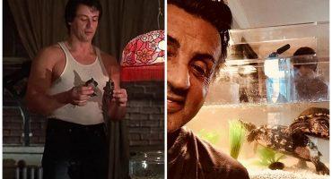 Sí, Sylvester Stallone tiene las mismas mascotas que aparecieron en 'Rocky'