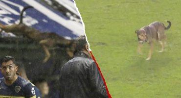 Conoce al perro 'volador' que invadió la Bombonera en un partido de Boca Juniors