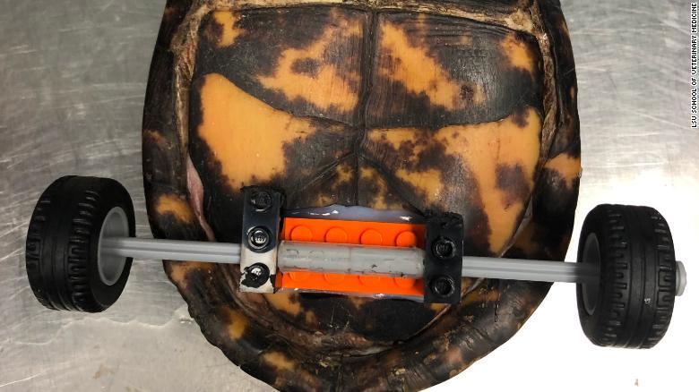 Resultado de imagen para pedro la tortuga con ruedas