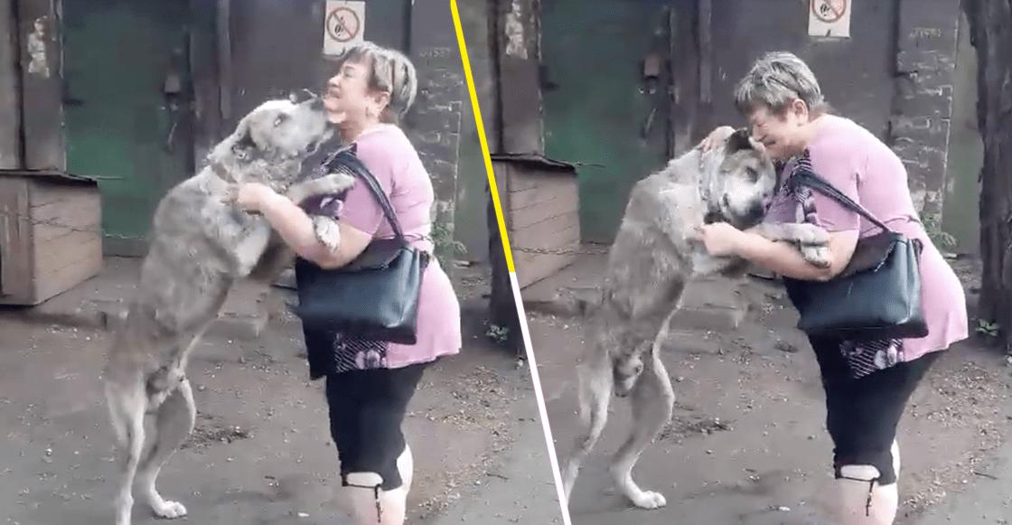 El sueño de Hachiko: Checa la reacción de este perrito al reencontrarse dos años después con su dueña