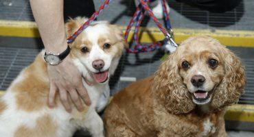 ¿Cómo acercarse a un perro desconocido para acariciarlo? Los veterinarios responden