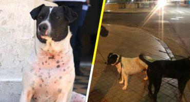 Blanqui, el perro que estaba a toda una facultad en Argentina