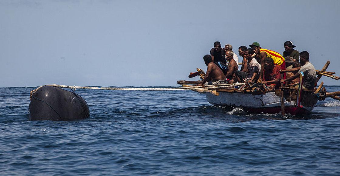 Luego de 33 años, Japón reanudará la caza legal de ballenas