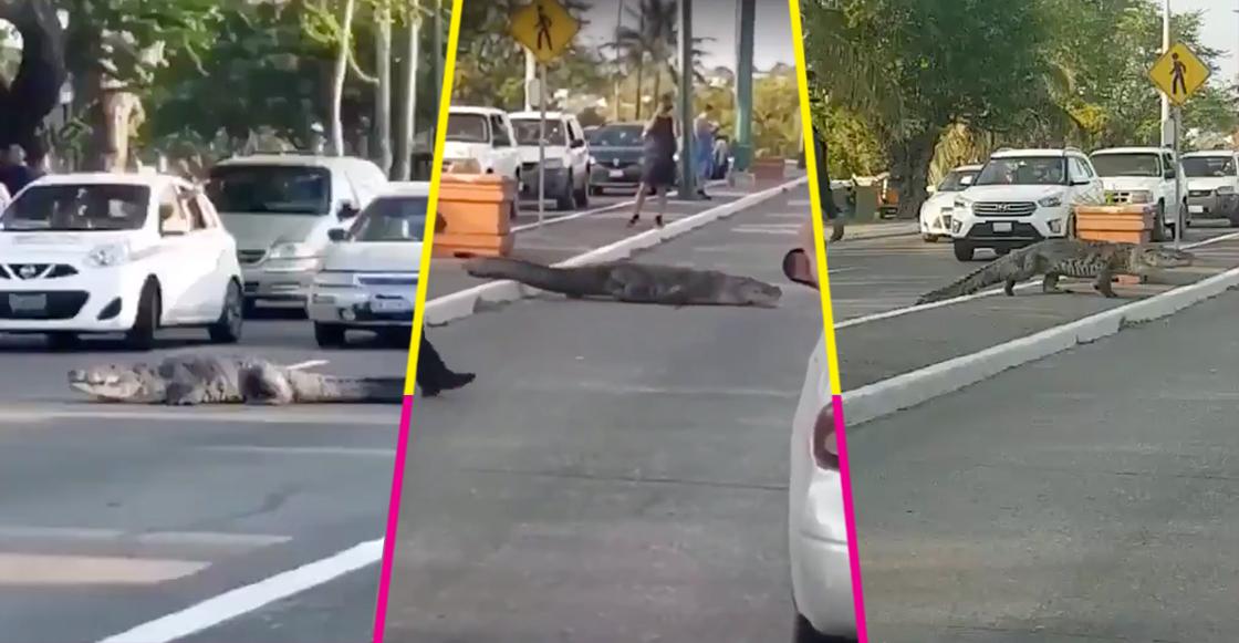 ¡Cuidado, cruce de cocodrilos! En Tampico un cocodrilo de más de 2 metros cruzó una avenida