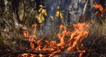 En lo que va de 2019, 17 brigadistas han perdido la vida por sofocar incendios: Conafor