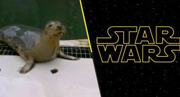 Ternura nivel: Mira esta foca bebé cantando el tema de Star Wars
