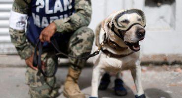 ¡Heroína Nacional! La perrita Frida se jubila de la Marina y así la despidieron ❤️
