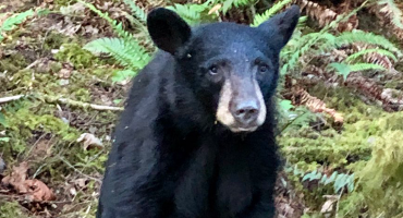 Mundo triste y enfermo: Asesinan a un oso porque se había acostumbrado demasiado a los humanos