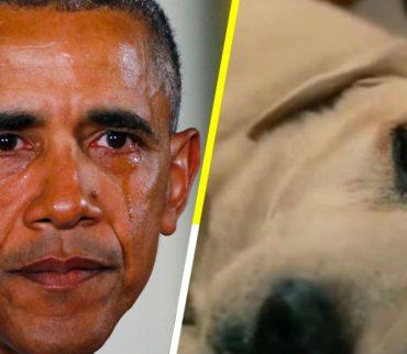 Así es, este sitio web te advierte si un perrito muere en una película
