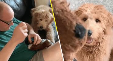 Ow: Tienen que checar la reacción de este perrito cuando repararon su osito de peluche