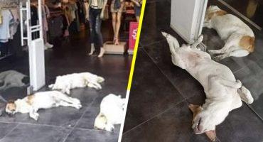 ¡Bravo! Esta tienda de ropa deja que los perritos se metan a su negocio para refugiarse del calor