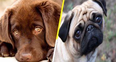 ¡La ciencia lo confirma! Esta es la razón por la que nadie se resiste a la mirada tierna de los perros 