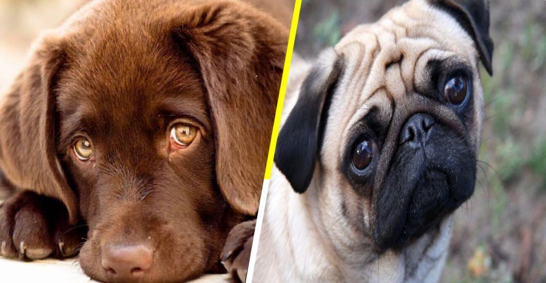 La ciencia lo confirma Esta es la razón por la que nadie se resiste a la mirada tierna de los perros