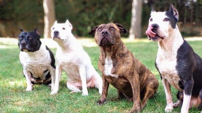 Las razas de perros más peligrosas para los niños, según la ciencia