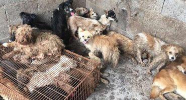Rescatan a 62 perritos que iban a ser cocinados en un festival de China 