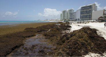 5 puntos para dimensionar la llegada de sargazo al Caribe mexicano