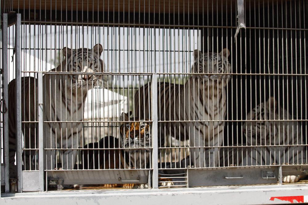 animales-silvestre-circo-México