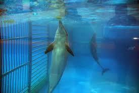 United Airlines deja de vender boletos para SeaWorld por crueldad animal