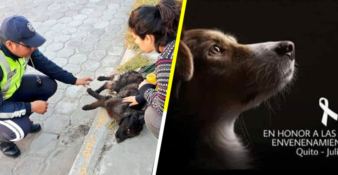 Malditos: Donan alimento envenenado a refugios y matan a más de 20 perritos