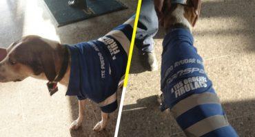 Él es Firulais, el perrito callejero que ahora trabaja en una empresa de transportes en Tamaulipas 😭❤️