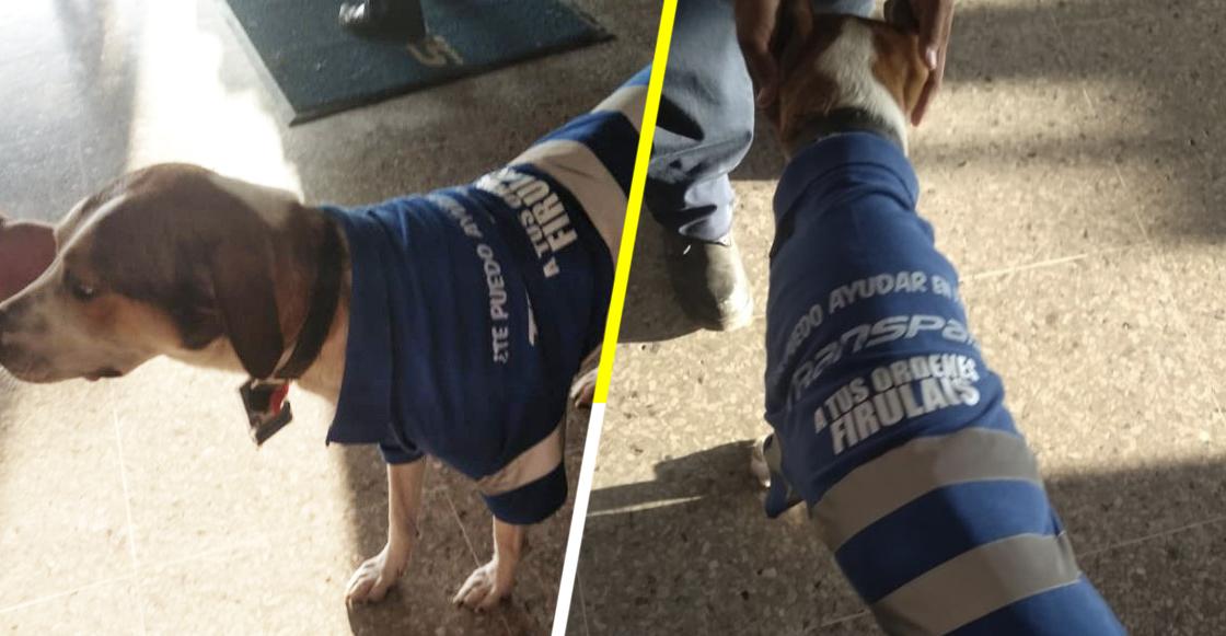 Él es Firulais, el perrito callejero que ahora trabaja en una empresa de transportes en Tamaulipas