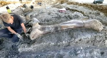 ¡Científicos hallan hueso de fémur de casi dos metros perteneciente a un dinosaurio!