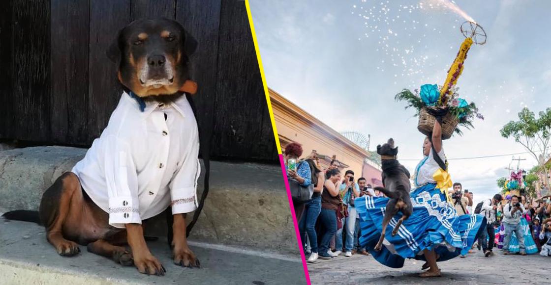 Mazapán, el perrito bailador de Oaxaca, recibió una guayabera y va a ir a la Guelaguetza