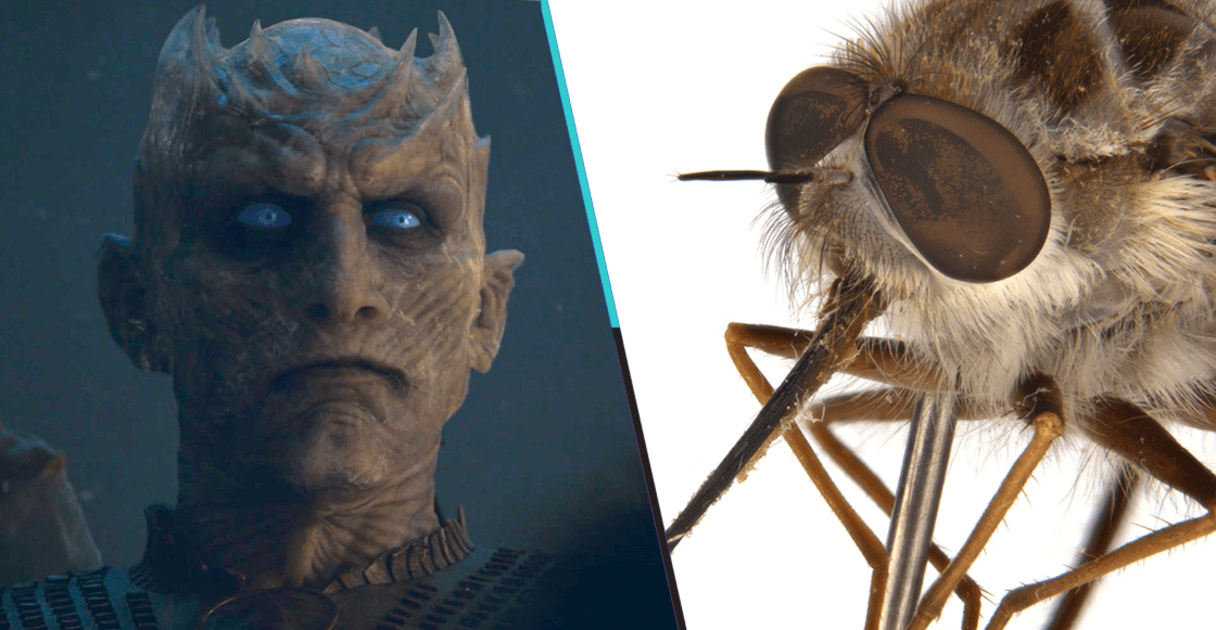 Winter is bee: Nombran a una mosca en Australia como el Night King de 'Game of Thrones'
