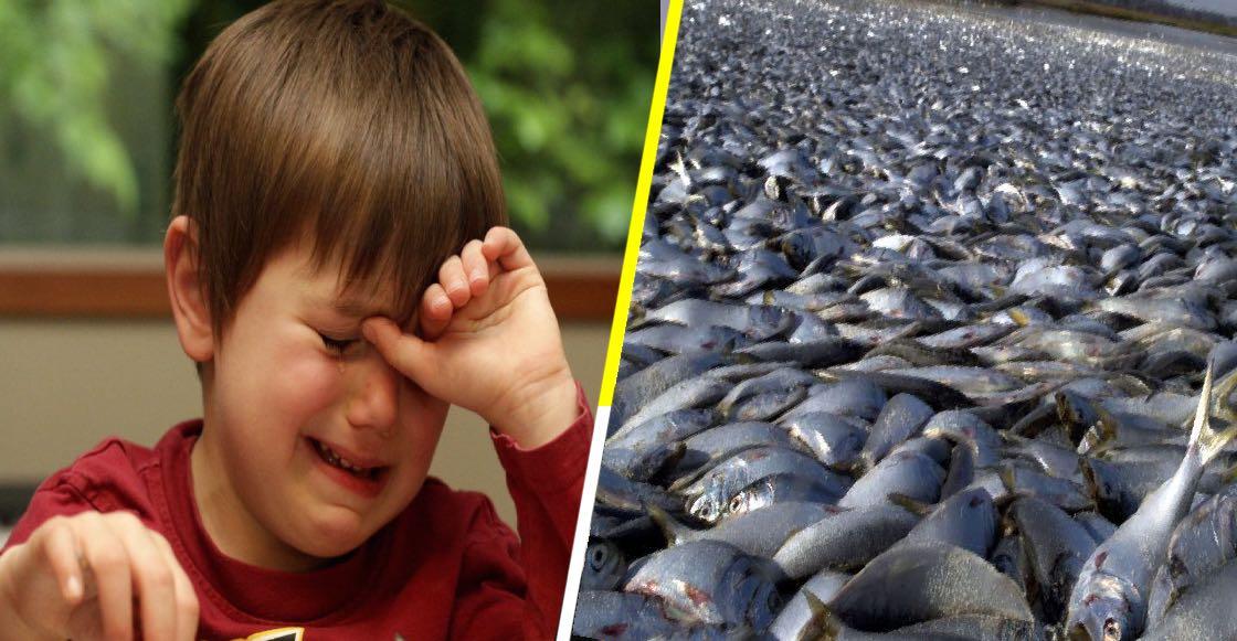 Un tercio de peces mexicanos, en peligro de extinción