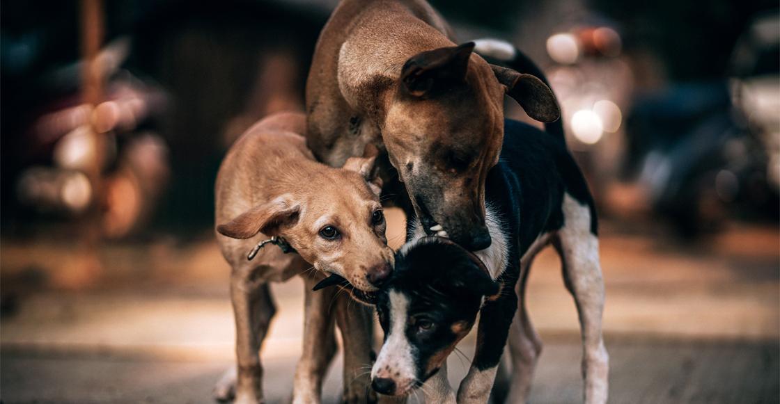 Exhiben a mujer que maltrata a los perros que rescata en las calles de la CDMX