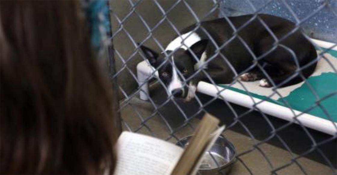 Presos y voluntarios se dedican a tranquilizar perritos durante las celebraciones del 4 de julio