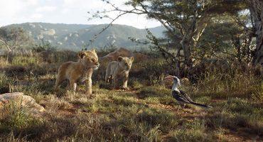¿Por qué el remake de 'El rey león' sí puede ser un live action?