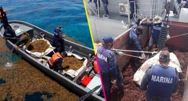 En tres meses, la Marina ha recolectado más de 38 mil toneladas de sargazo en Quintana Roo