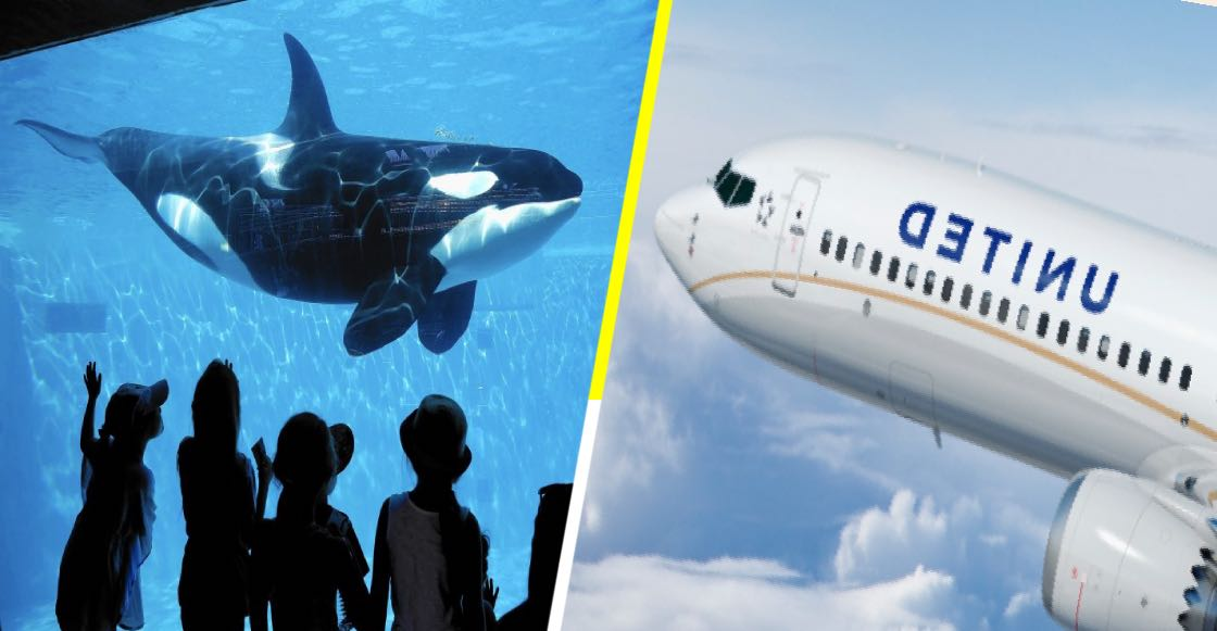 United Airlines deja de vender boletos para SeaWorld por crueldad animal