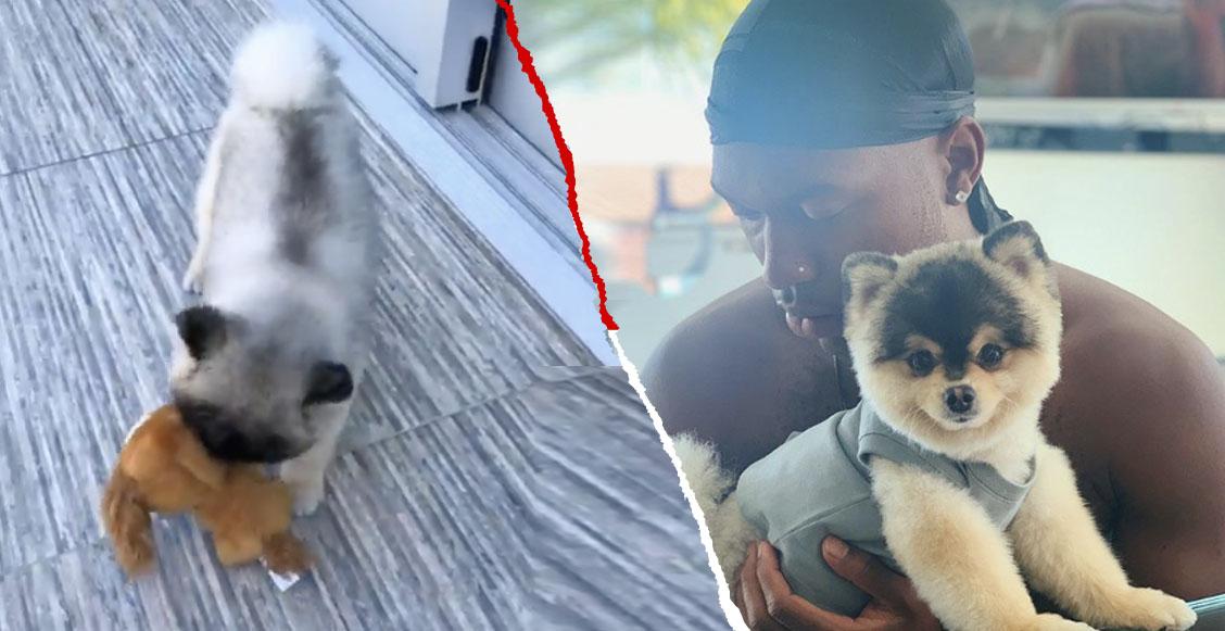 Fé en la humanidad restaurada: ¡Devolvieron el perro robado de Daniel Sturridge!