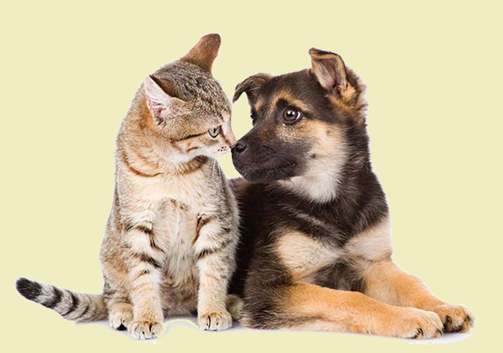 Besar a tu mascota podría enfermarla y enfermarte, advierte la UNAM