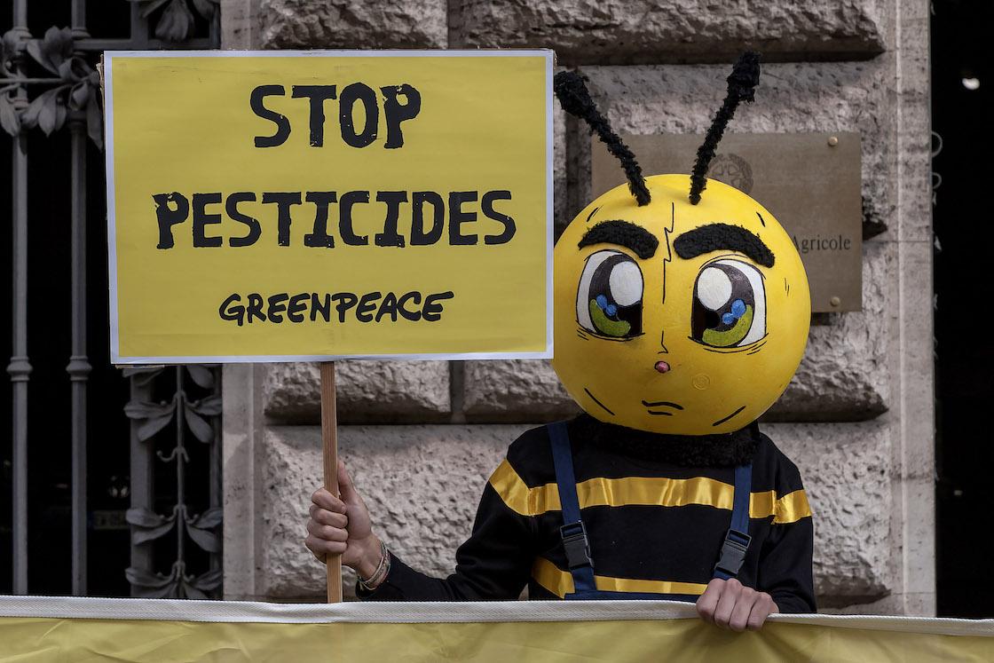 abejas-mueren-pesticida-protesta-brasil-03