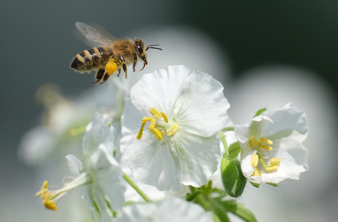 abejas-mueren-pesticida-protesta-brasil-04