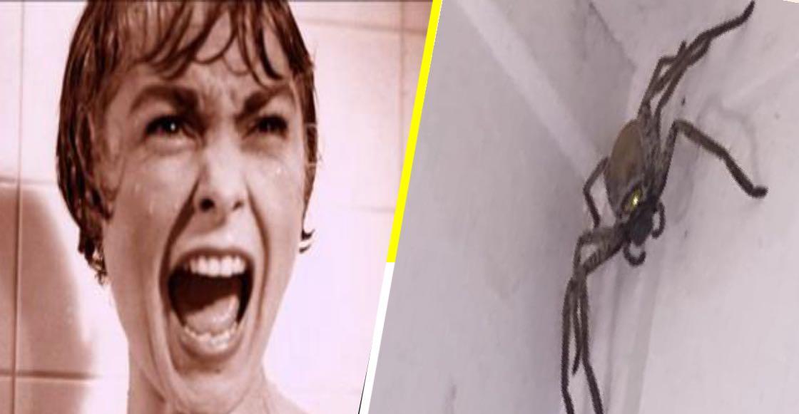 ¡WTF! Esta araña gigante se resguardó en una casa de Australia