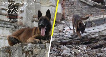 Gracias por todo, amigo: Murió Chichí, el perrito rescatista del 19S 😞