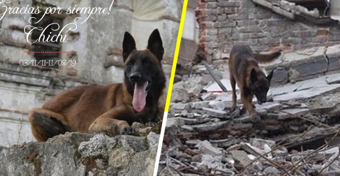 Gracias por todo, amigo: Murió Chichí, el perrito rescatista del 19S