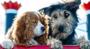 El live-action de 'La Dama y el Vagabundo' está formado por perritos rescatados