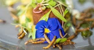 'The Insect Experience', el primer restaurante especializado en entomofagia