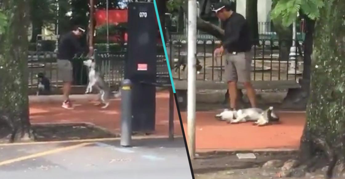 Circula un video en que presunto entrenador de perros asfixia a un Husky